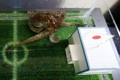 An octopus named Hacchan predicts Japan's victory in their 2014 World Cup soccer match against Ivory Coast by choosing the mock goal with the Japanese national flag, at Shinagawa Aqua Stadium aquarium in Tokyo