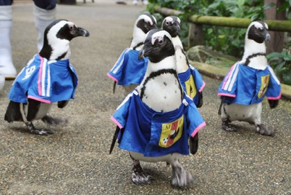 Penguins walk in national World Cup team jerseys