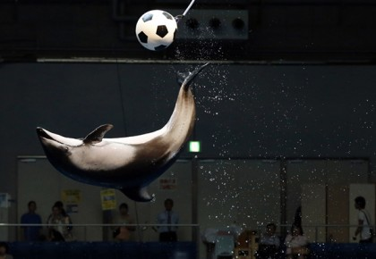A dolphin jumps out of the water to knock a soccer ball in the air as part of an event in support of Japan's national soccer team at the 2014 World Cup during a show at Shinagawa Aqua Stadium aquarium in Tokyo